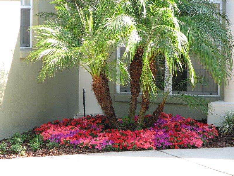All Good Landscape Designs Have A Focal Point In The Front Yardu2014most Often  Thatu0027s A Specimen Tree. When Planning Your Landscaping, Itu0027s Important To  Ensure ...