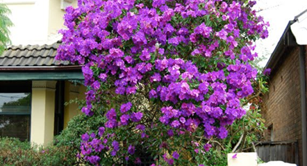 If You Re Thinking About Including Some Trees In Your Front Yard Landscaping A Flowering