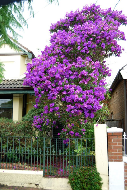 Why A Flowering Tree Specifically Not Only Does It Create Instant Curb Eal Trees Tend To Be Smaller Than